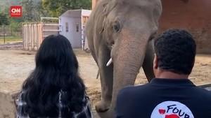 VIDEO: Gajah Paling Kesepian di Dunia 'Hijrah' ke Kamboja