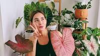 <p>Selain itu, wanita asal Bandung ini juga sekarang sedang hobi merawat tanaman hias lho. (Foto: Instagram @chantaldellaconcetta_)</p>