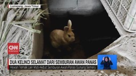 VIDEO: 2 Kelinci Selamat dari Semburan Awan Panas Semeru