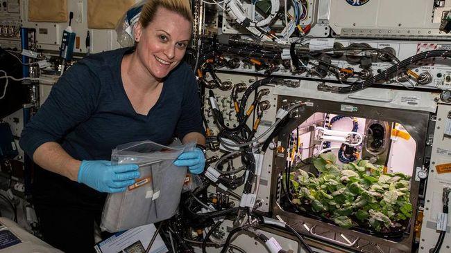 Astronaut NASA panen lobak di stasiun luar angkasa internasional setelah sebelumnya sempat menanam berbagai sayuran hijau.