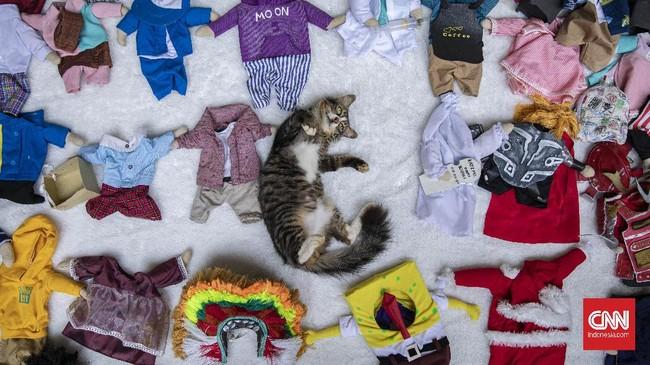 Fredi Lugina Priadi (39) memutuskan berhenti menjadi guru tiga tahun lalu. Ia kini menjadi penjahit sekaligus desainer kostum khusus untuk kucing.