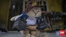 FOTO: Asa Desainer Kostum Kucing Kala Pandemi