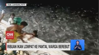 VIDEO: Ribuan Ikan Lompat ke Pantai, Warga Berebut