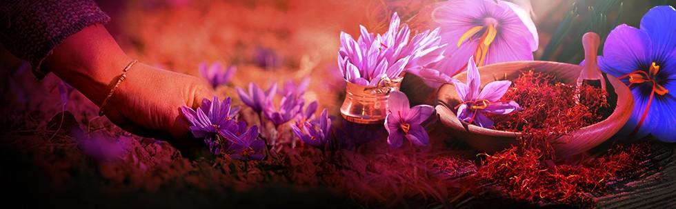 Saffron Rempah Termahal Dunia