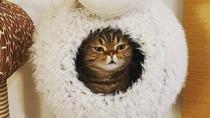 Kenalan dengan Kucing Impian Sobat Online, Lulu dari Kitty Saurus Si Kucing Meme!