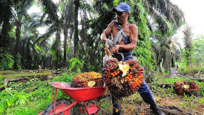 Gapki menyatakan tidak ada kebijakan Pemutusan Hubungan Kerja (PHK) pada industri sawit akibat pandemi corona.