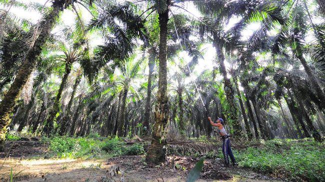 KPK mengungkapkan potensi penerimaan negara melalui pajak untuk komoditas sawit seharusnya bisa mencapai Rp40 triliun.