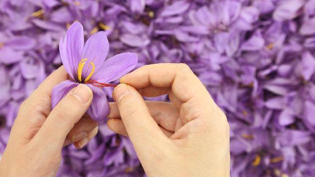 Kegunaan saffron tidak hanya untuk dikonsumsi sebagai bahan penyedap dan perwarna makanan tapi juga menjadi sabun yang memberikan manfaat untuk perawatan kulit.