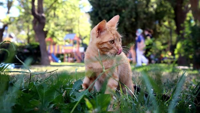 Kucing Kamu Suka Makan Rumput? Ini Alasannya