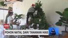 VIDEO: Pohon Natal Unik Terbuat Dari Tanaman Hias