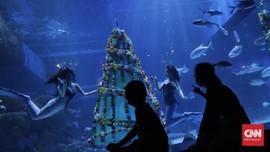 FOTO: Putri Duyung Rayakan Natal di Bawah Laut