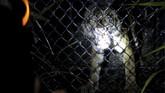 Seekor harimau Sumatera dievakuasi di Kabupaten Aceh Singkil, Aceh, Rabu (23/12), setelah dilaporkan mengganggu hewan ternak milik warga.