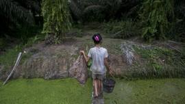 FOTO : Ironi Pramuka AS dan Buruh Anak Kebun Sawit