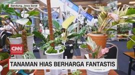 VIDEO: Tanaman Hias Berharga Fantastis