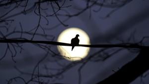 FOTO: Bulan Purnama Terakhir 2020 di Berbagai Belahan Dunia