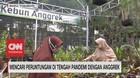 VIDEO: Mencari Peruntungan di Tengah Pandemi Dengan Anggrek