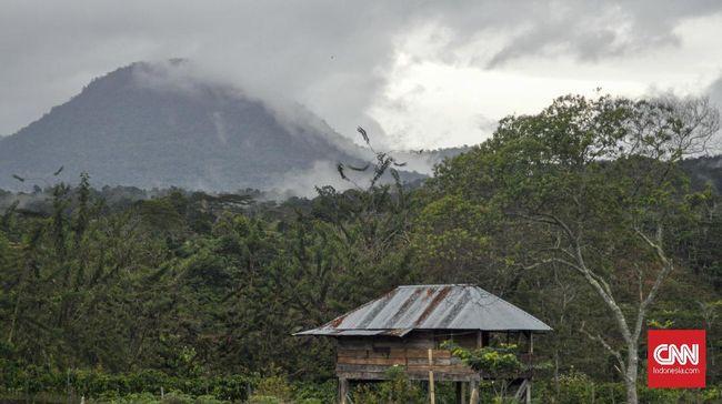 Petani kopi mulai membudidayakan sayur-mayur untuk memenuhi kebutuhan hidup. Pendampingan warga lokal diperlukan guna meningkatkan kesejahteraan.