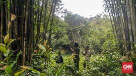 Jejak Harta Karun Hutan Puyang Sure di Muara Enim
