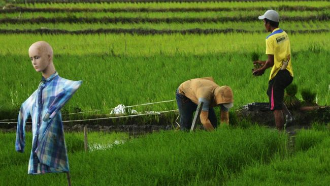 Kementerian ATR/BPN mengatakan sekitar 90 ribu hektare lahan sawah berpotensi hilang setiap tahunnya.