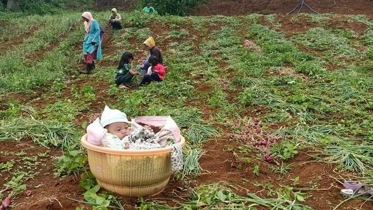 Potret bayi berusia 4 bulan di Bandung sudah dibawa berkebun