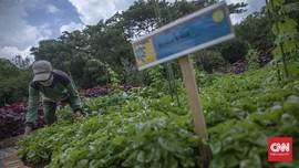 Pertanian Diklaim Lebih Kuat dari Industri saat Pandemi