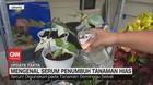 VIDEO: Mengenal Serum Penumbuh Tanaman Hias