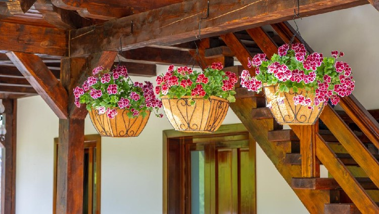 Baskets of hanging petunia flowers on balcony.