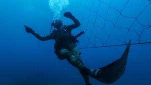 FOTO: Jaring Hiu yang Bikin Mati Lemas
