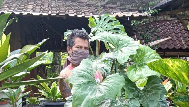 Penjual tanaman hias di Depok yang mendapat tawaran barter koleksinya dengan rumah senilai RP 500 juta.