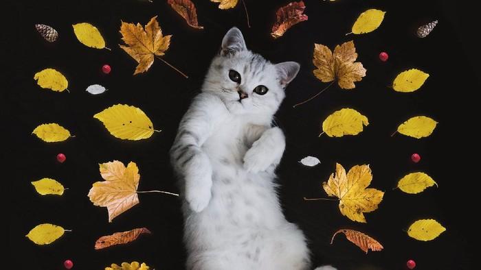 Uwu Banget, Ini Tanda-tanda Kamu Dicintai Kucingmu!