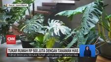 VIDEO: Tukar Rumah Rp 500 Juta dengan Tanaman Hias