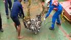 VIDEO: Gunakan Crane, Tim Sar Angkat Turbin Gas SJ182