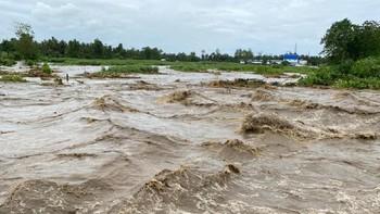 Mata Lele, Tanaman Penyebab Banjir Pekalongan Berwarna Hijau
