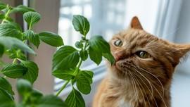 12 Tanaman Hias yang Beracun untuk Hewan Peliharaan