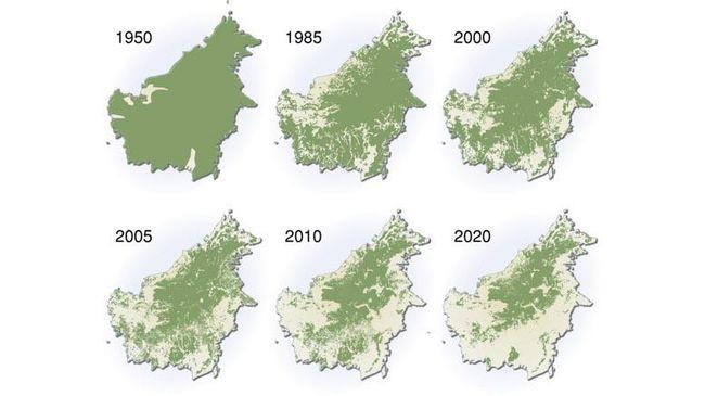Sebuah peta menggambarkan laju deforestasi dan proyeksi deforestasi di Kalimantan beredar di media sosial seiring banjir besar yang terjadi di Kalsel.