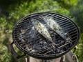 Kaya Omega-3, Ikan Kembung Bisa Gantikan Salmon
