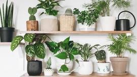 7 Tanaman Hias yang Menyaring Udara Dalam Ruangan