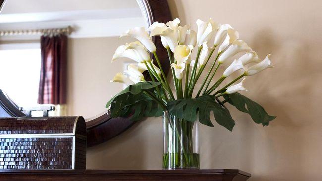 Berikut 5 tanaman hias bunga yang hidup di air yang bisa diletakkan di vas kaca maupun sebagai hiasan kolam minimalis rumah Anda.