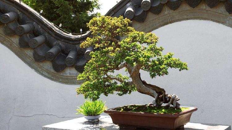 Ilustrasi bonsai
