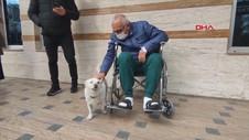 VIDEO: Anjing Ini Setia Menunggu Tuannya Dirawat di RS