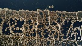 FOTO: Tepi Laut Mati yang Mengkristal
