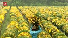 VIDEO: Desa Bunga Vietnam Siap Ramaikan Imlek