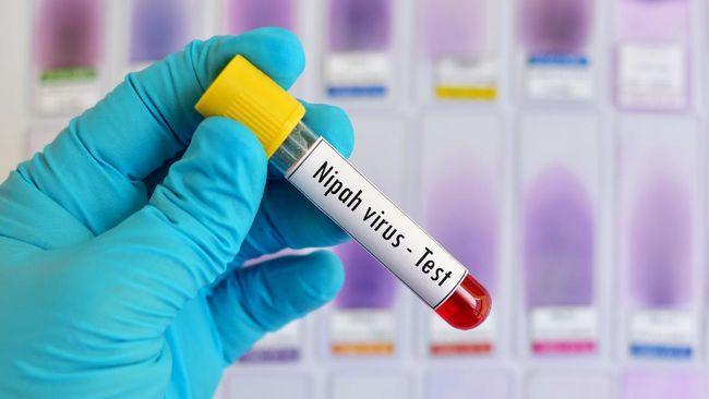 Virus Nipah dikhawatirkan jadi pandemi baru. Untuk mengatasinya, Anda perlu mewaspadai cara penularan virus Nipah.