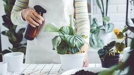 4 Cara Menghemat Uang saat Berkebun