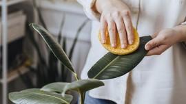 5 Cara Membersihkan Daun Tanaman Hias agar Tetap Mengilap