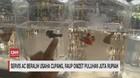 VIDEO: Servis AC Beralih Usaha Cupang
