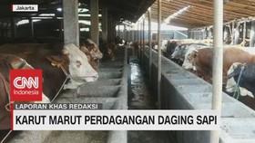 VIDEO: Karut Marut Perdagangan Daging Sapi