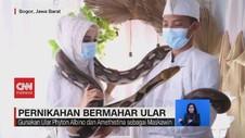 VIDEO: Pengantin Jadikan Ular sebagai Mahar Pernikahan