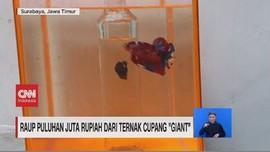 VIDEO: Raup Puluhan Juta Rupiah dari Ternak Cupang 'Giant'