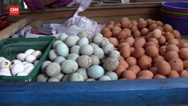 VIDEO: Harga Telur Turun, Pedagang Keluhkan Sepi Pembeli